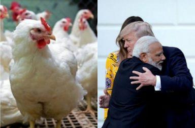 chicken nationalism (1)