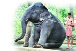 Bruised, Starved And Sick: Kerala HC To Decide Temple Elephant's Fate