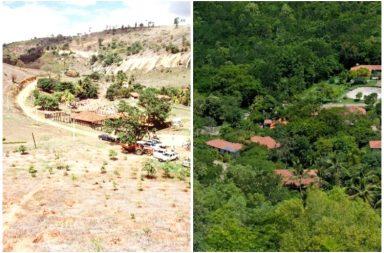 instituto terra brazil