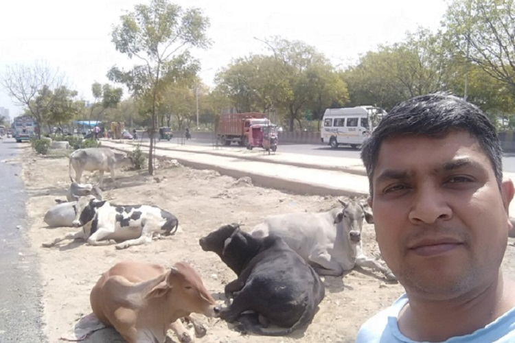 #SelfieWithStrayCow: How Noida Residents Are Ensuring Safer Roads