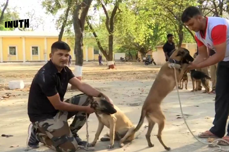 This Dog Breed That Guards White House Has Been Now Inducted Into MP Police