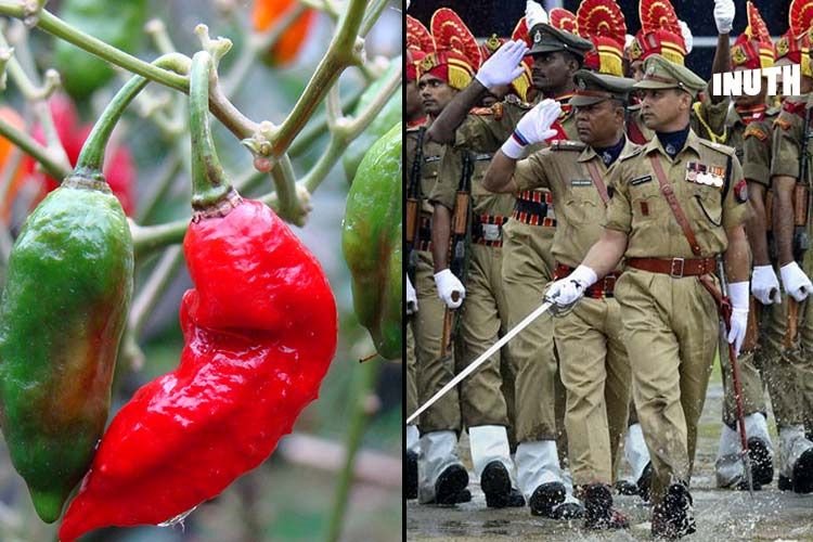 Bhut Jolokia: Assam Police Arm Themselves With World's HottestPepper