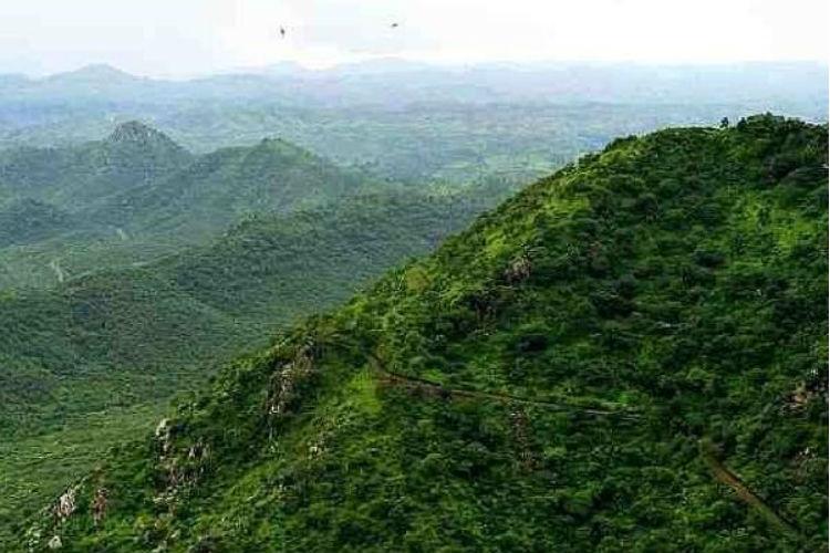 aravalli forest