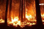 Brazil's Amazon Rainforests Are Burning, And Its Consequences AreHuge