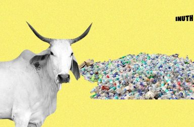 cow plastic feature