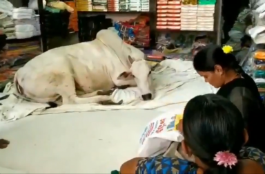 cow shop andhra