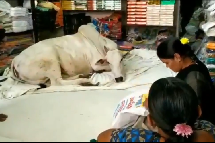 At An Andhra Shop, People Buy Clothes While Cow Sits Around & Chills